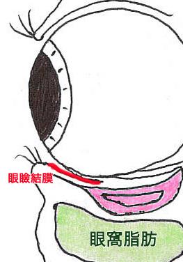 目の構造_03