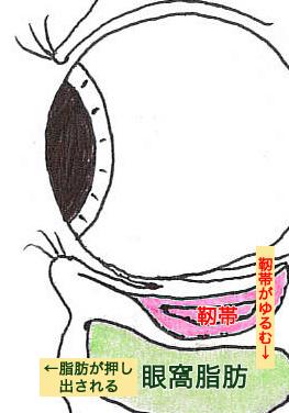 目の構造2_03