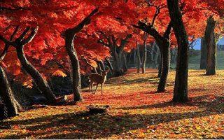 秋の奈良の雰囲気が素敵過ぎる。秋空の下を歩くほっこり女子旅。